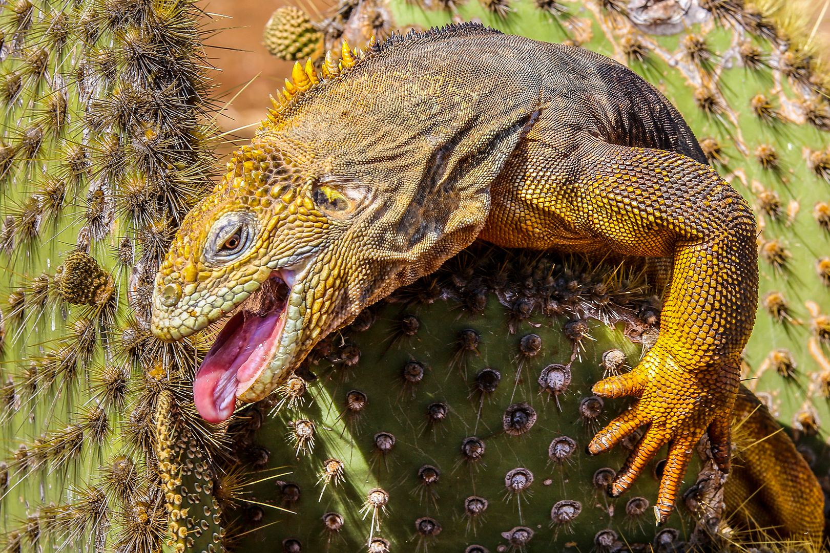 """2018 Nature Section """"A Prickly Lunch"""" by Margot Hughes: Awarded SSNEP Silver Medal"""
