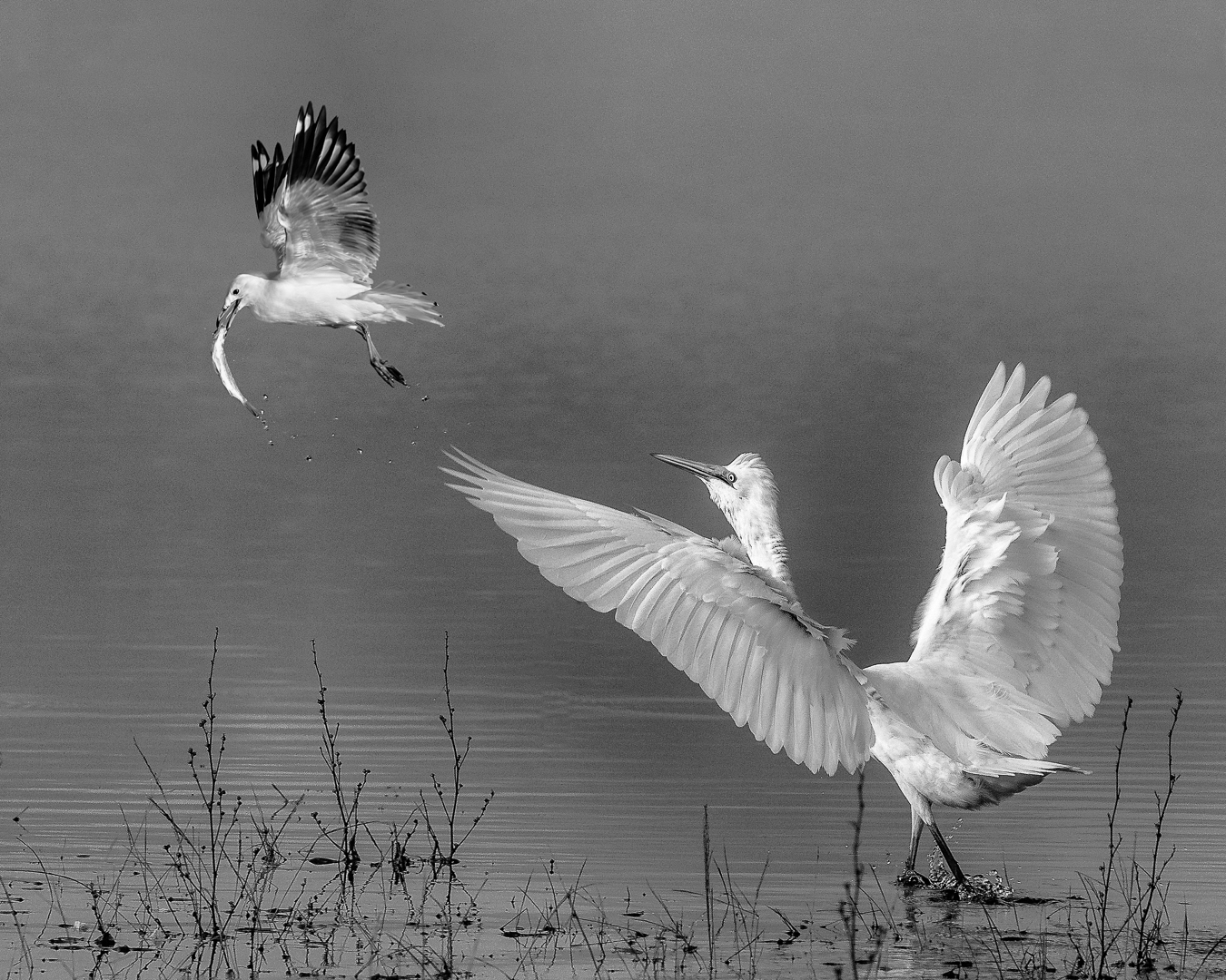 """2019 Open Monochrome Section """"Theif !"""" by Lyndee O'Gower: Awarded APS Gold Medal"""