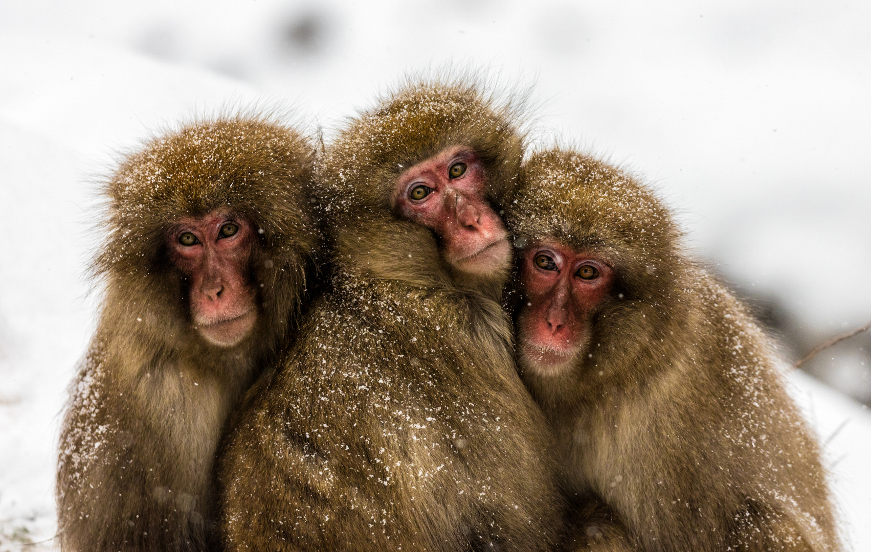 """2019 Nature Section """"Three Wise Monkeys"""" by Pamela  Rixon AAPS: Awarded APS Gold Medal"""